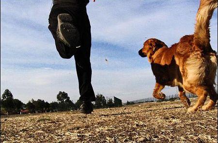 No es tonteria! ¿Qué hacer si nos persigue un perro cuando estamos entrenando? http://www.cmdsport.com/noticia/23779/Running/Que-hacer-si-nos-persigue-un-perro?.html